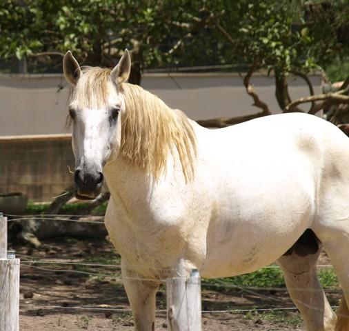 Cuidado, que tal verificar detalhes de onde seu cavalo está estabulado
