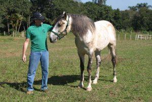 Cavalos podem diferenciar posturas humanas submissas e dominantes - Vergano Marumby