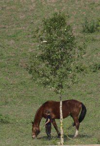 Cavalo com pata quebrada