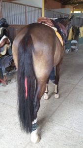 Fita no rabo do cavalo