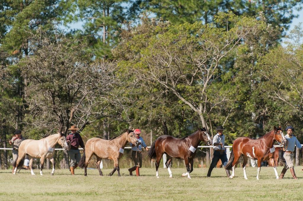 Região que vem registrando crescimento no número de usuários do Cavalo Crioulo recebe exposição que seleciona animais para a Expointer