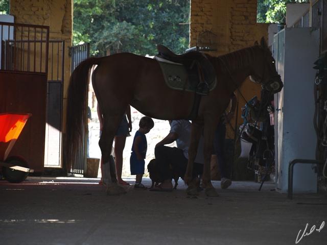 Tratador do seu cavalo