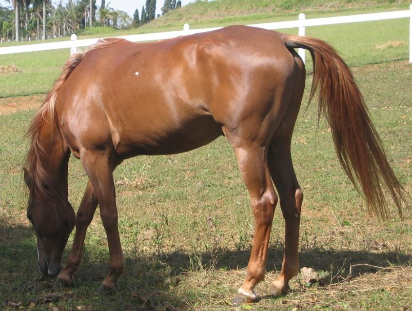 Biscoito, cavalos e suas características