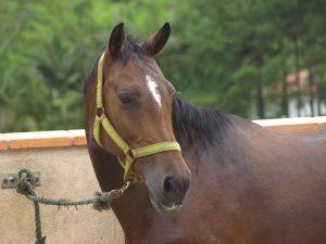 Expressões do cavalo, Formosa Itapuã