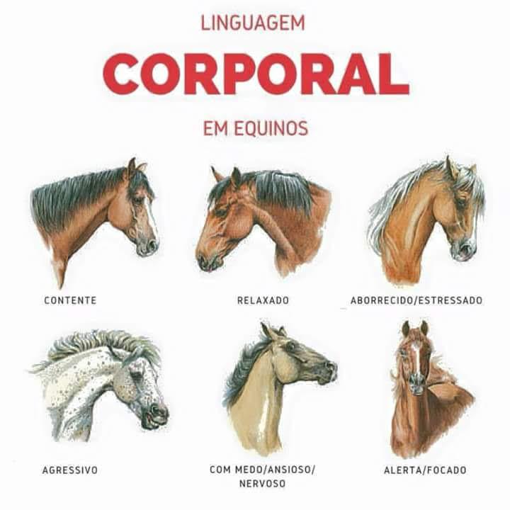 Linguagem corporal dos equinos