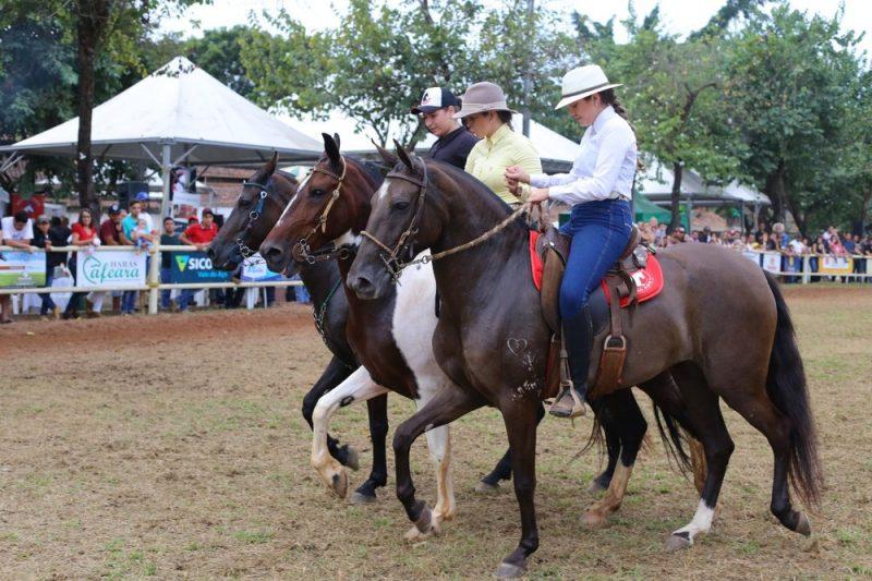 Raça de cavalo Mangalarga Marchador é considera a melhor do mundo para a montaria, Foto Marcos Pereira-Arquivo Pessoal