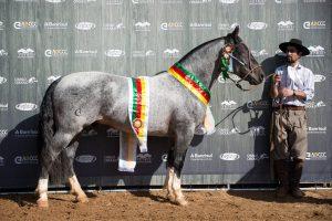 Araranguá - Comanche da SGV - Crédito Leandro Vieira ABCCC