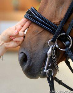 A regra de dois dedos que é preferida por muitos amantes de dressage clássicos