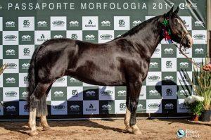 Capanegra Ursa Nativa (Foto Luis Felipe Ulbrich)