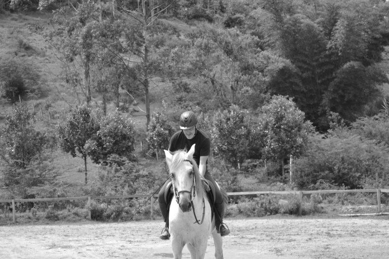 Terapia com cavalos é arma contra a depressão