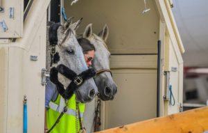 Chegadas FEI-Horse em Greeneville Spartanburg, Carolina do Sul (USA) - FEI Jogos Equestres Mundiais 2018, 3 de setembro de 2018 Foto FEI / Tori Repole