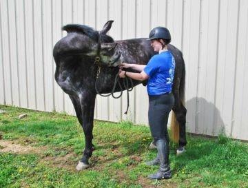 O caminho para a recuperação do corpo do cavalo
