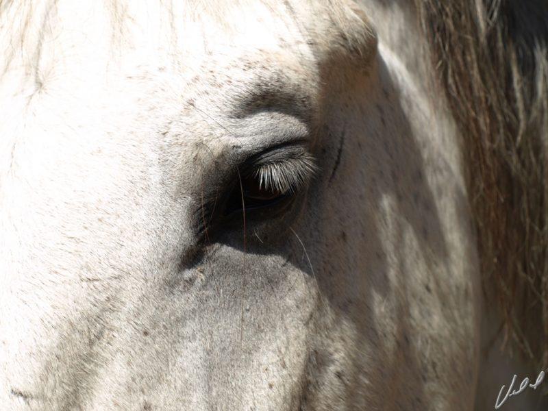 A maioria dos cavalos idosos tem problemas oculares