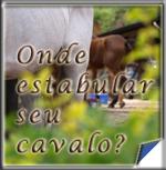 Onde hospedar (estabular) seu cavalo