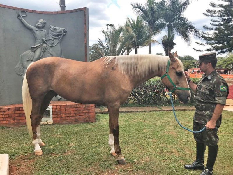 Comandande do 1º RCG, coronel Braga, ao lado do cavalo Baio e, ao fundo, quadro do Marechal Deodoro da Fonseca — Foto Marília Marques G1