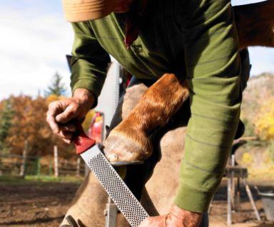 Gerenciando Equilíbrio do Casco do Cavalo e Distorção da Cápsula - O Cavalo