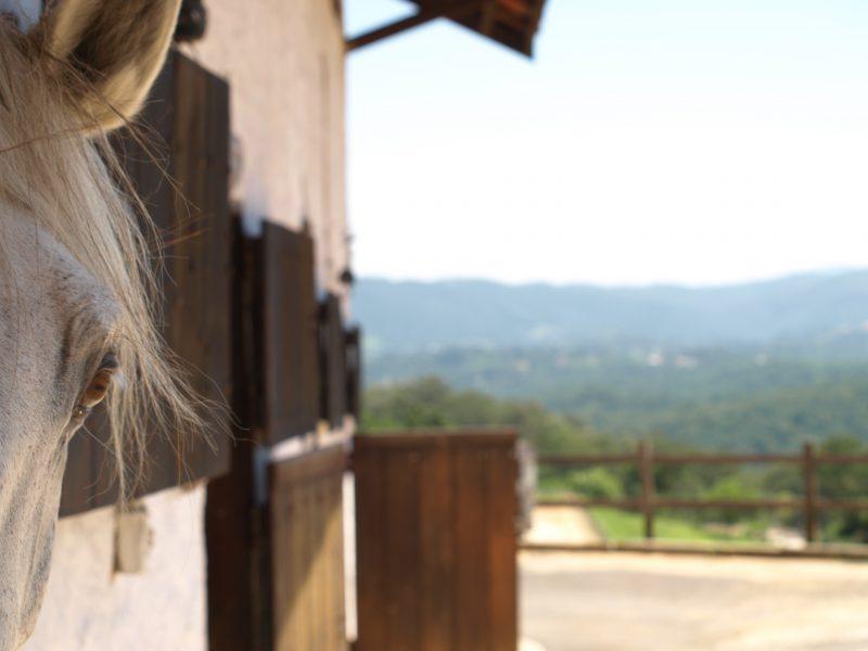 Haras Funchal, estabulagem, baias, hospedagem para seu cavalo