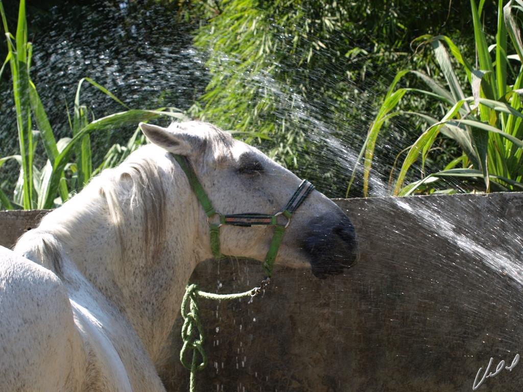 Água para o cavalo