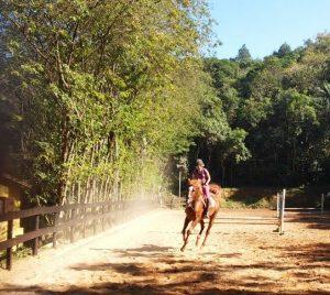 Cavalo quente, Biscoito TMV