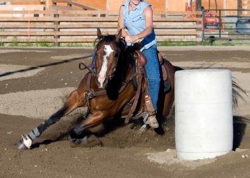 O líquido sinovial é tóxico para os tendões do cavalo