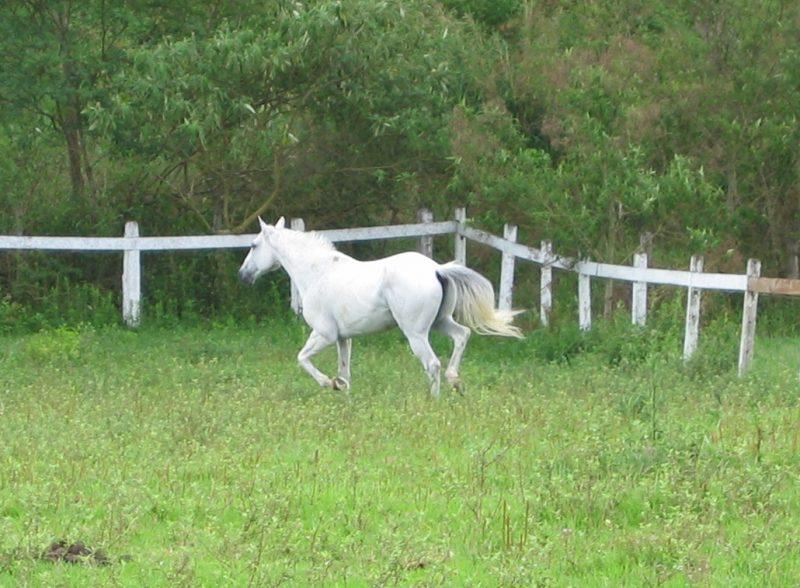 ATENÇÃO – facilite e agilize o processo de transferência de propriedade na venda de um cavalo BH