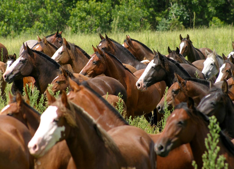 Cavalo Crioulo - Crédito José Guilherme Martini Divulgação
