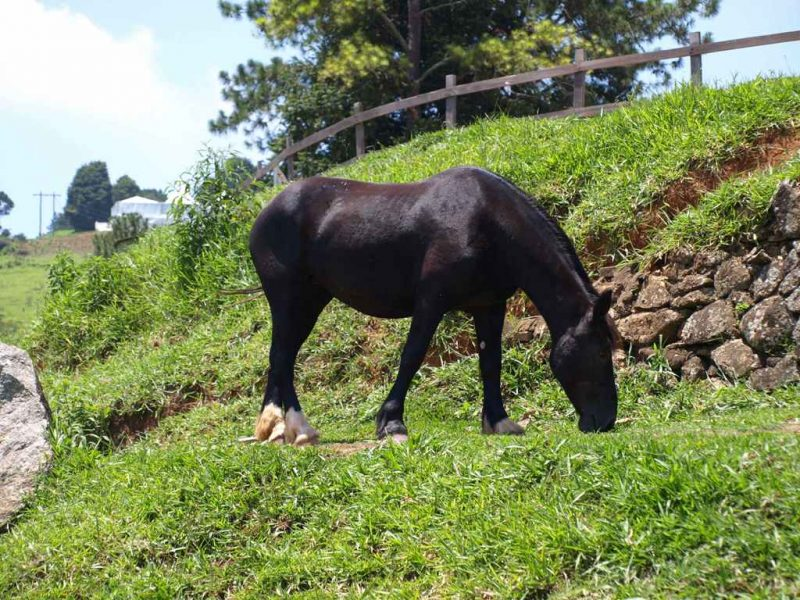Condição corporal dos cavalos