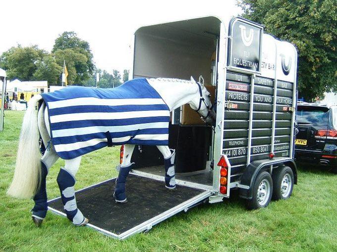 Transporte de cavalos