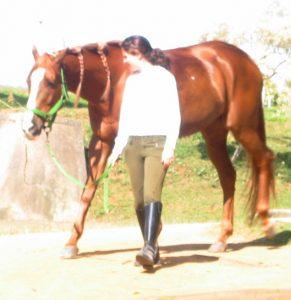 Andadura do cavalo, foto Biscoito TMV