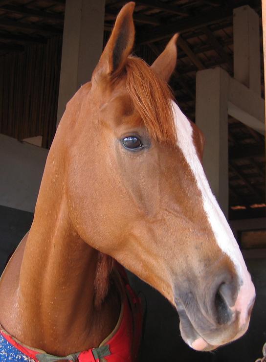 Cavalos Podem Sorrir ... da Maneira Própria, foto Biscoito TMV