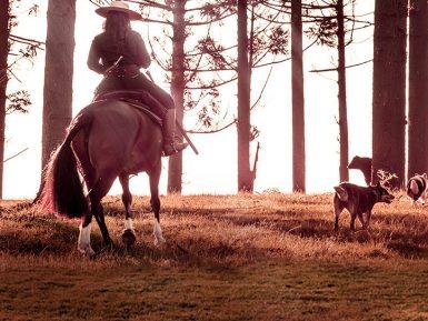 Criadoras de cavalos Crioulos se unem para promover leilão inédito na raça