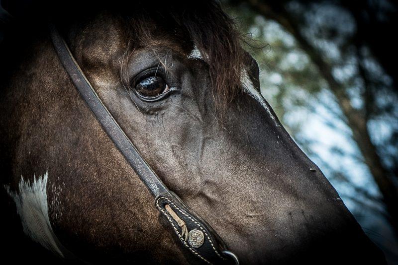 Equinos - Crédito Fagner Almeida (1)