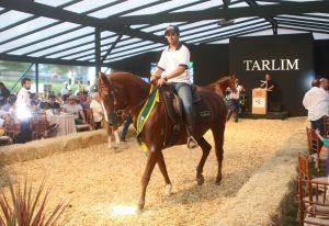 Evento alcançou a cotação média de R$ 194,7 mil por animal Crédito da foto Norberto Cândido.