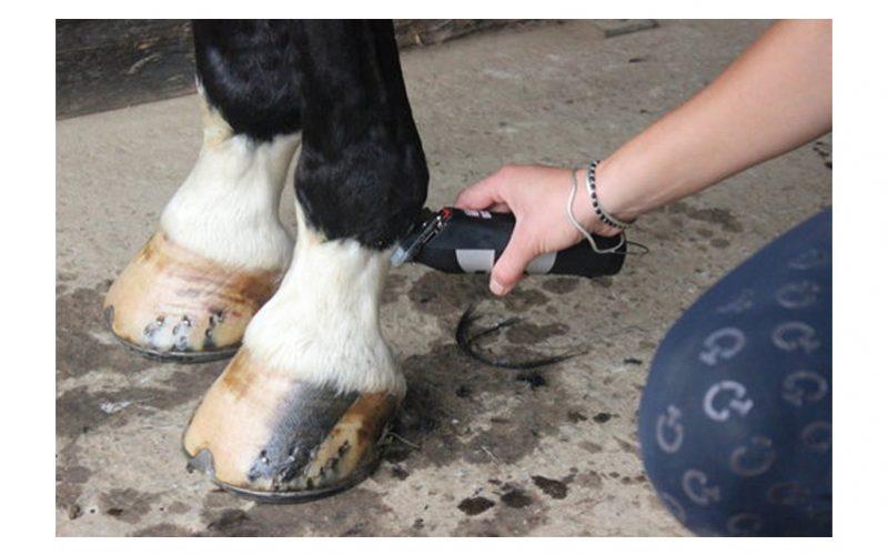 FEI proíbe tosquiar pernas do cavalo durante concursos, fonte Equisport