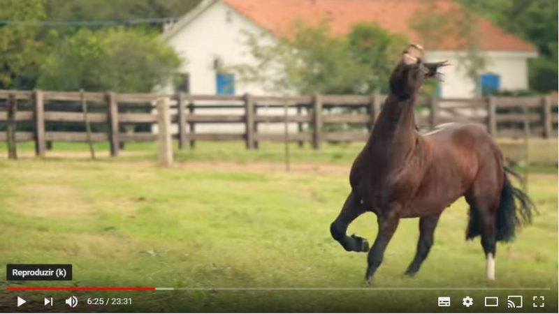 Programa Cavalos Crioulos de 10-03-2019