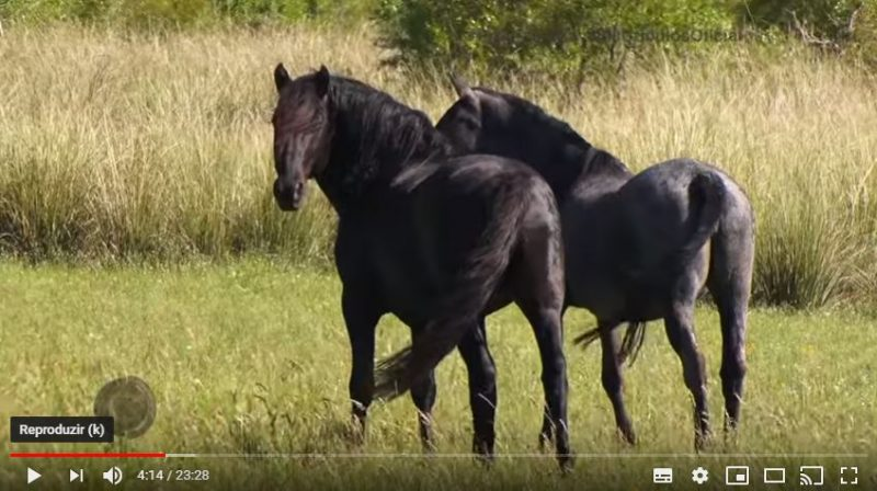 Programa Cavalos Crioulos de 24 de março