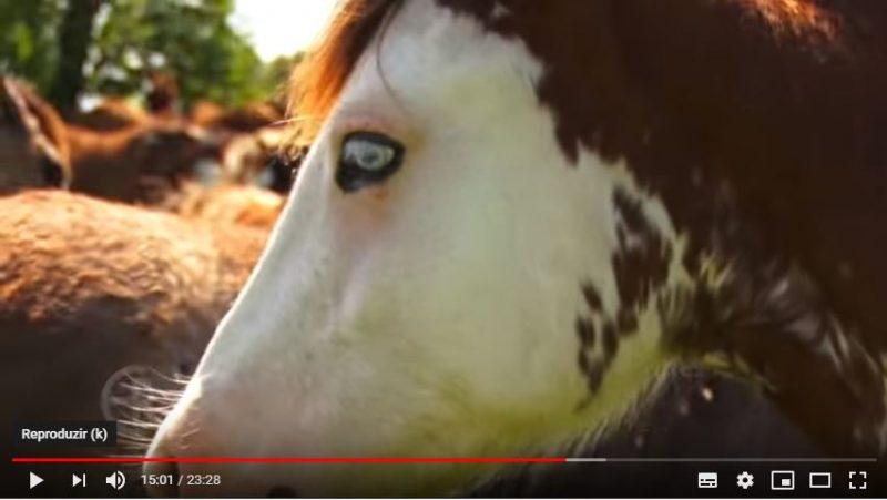 Programa Cavalo Crioulo Sem Fronteiras - 31-03