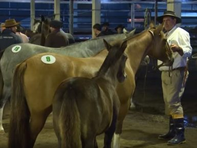 Programa – O Cavalo Crioulo sem Fronteiras é especial do Bocal de Ouro.