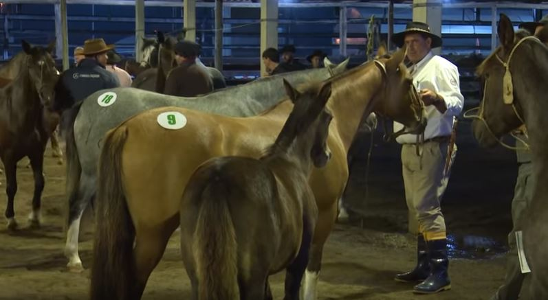 Programa Cavalo Crioulo sem Fronteiras 13 de abril 2019