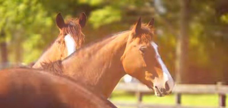 Programa Cavalos Crioulos de 07-04-2019