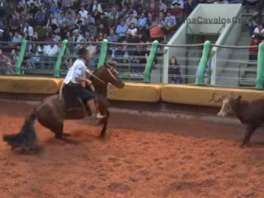 Programa Cavalos Crioulos de 14/07/2019