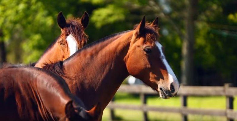 Programa Cavalos Crioulos de 24 de abril