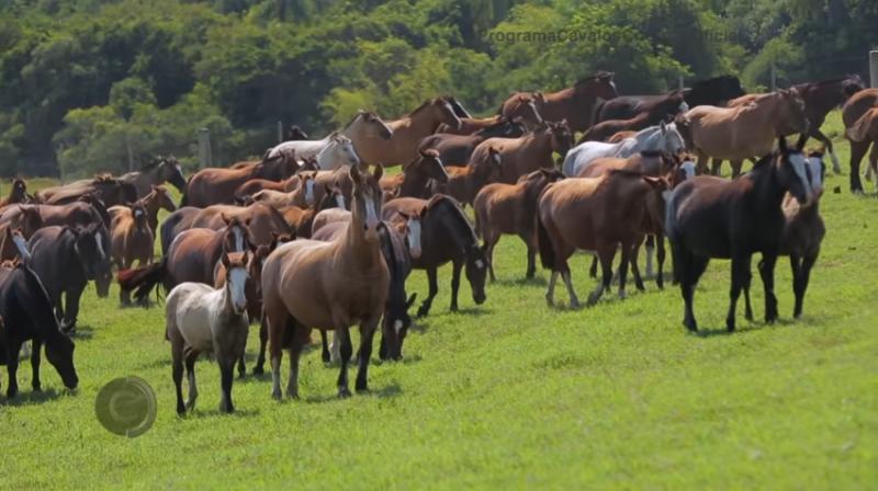 Programa Cavalos Crioulos de 28-04-2019