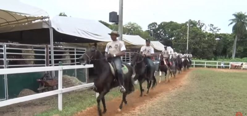 Programa Mangalarga Marchador TV de 14 de março de 2019