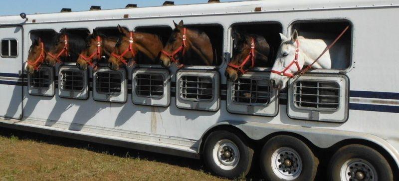 Transporte de cavalos (1)