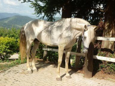 Meu cavalo morreu