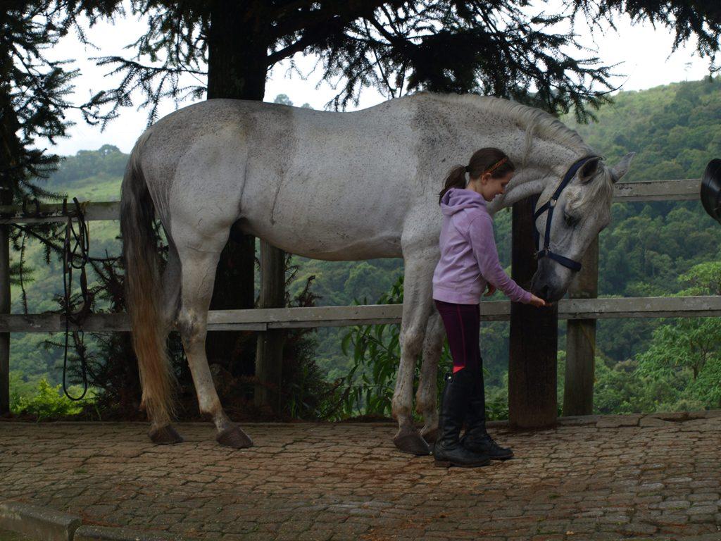 Emoções do cavalo, crenças humanas e como elas conduzem os cuidados