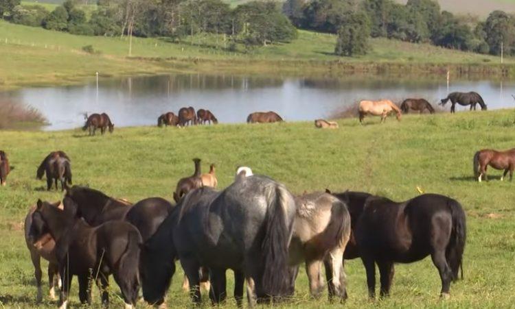 Programa Cavalo Crioulo Sem Fronteiras do dia 18 de maio de 2019