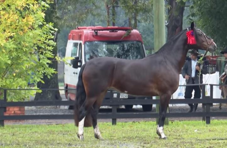 Programa Cavalo Crioulo sem Fronteiras 4 de maio de 2019