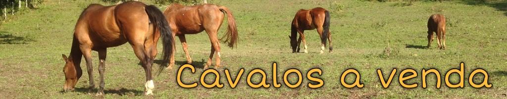 Cavalos a venda, consulte, divulgue